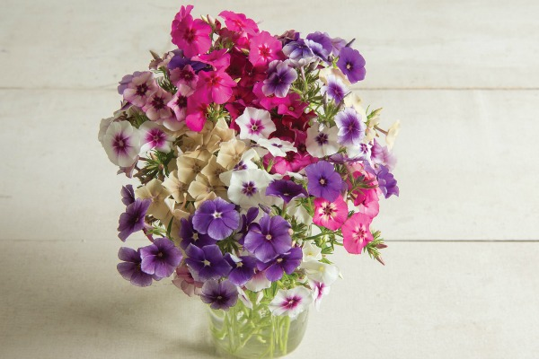 Learn how to harvest cut flowers for long-lasting bouquets