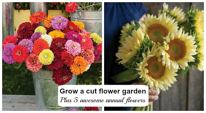 Learn how to plan, plant, grow, and harvest your own cut flowers.