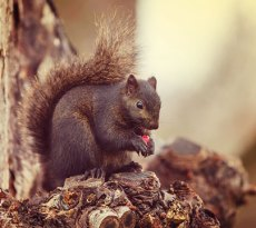 How to keep squirrels out of your garden - from veggie gardens to bulb gardens