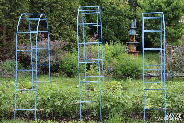 Use garden arches to grow vegetables vertically.
