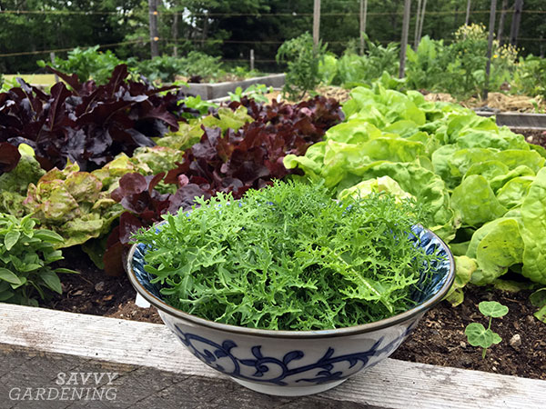 Niki recommends sowing smaller amounts of seeds every few weeks. This will give you the longest harvest of high-quality veggies. #sponsored