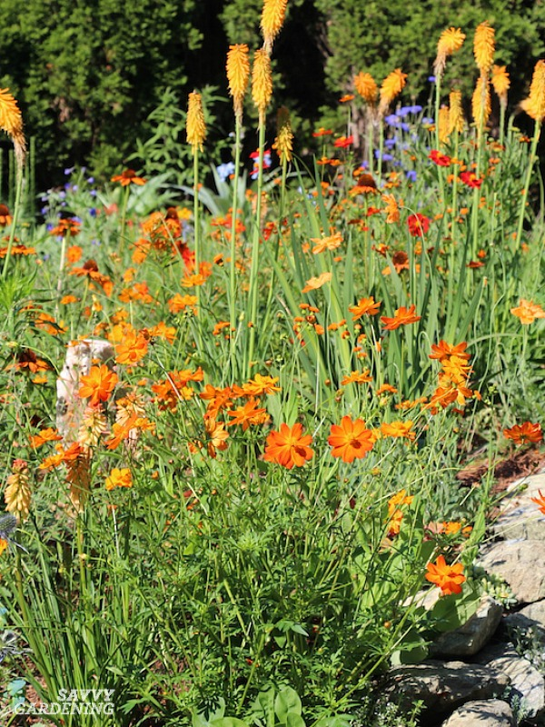 Landscape annuals for color and deer resistance.
