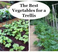 Learn the best vegetables for a trellis