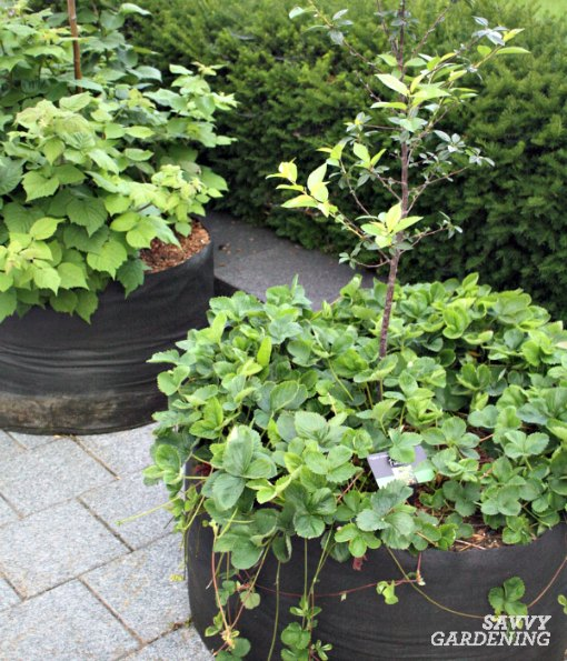 Use grow bags, planters, or pots to grow berries on a sunny deck or patio.