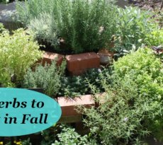 The Best Herbs To Start From Seed For Garden Beds Pots