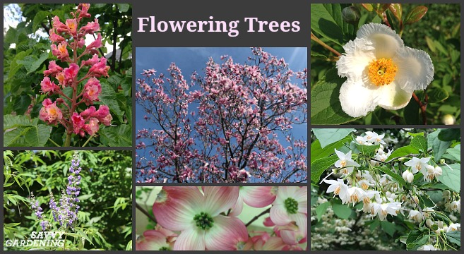 Flowering Trees For Home Gardens 21 Beautiful Choices