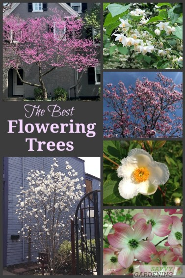 The Best Flowering Trees for Your Landscape: 21 Beautiful Choices