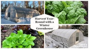 Grow vegetables year round with a winter greenhouse.