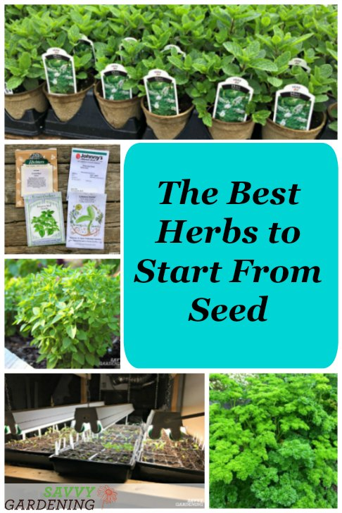 herbs to start from seed
