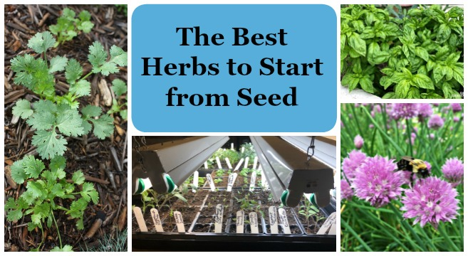 Learn the best herbs to grow from seed