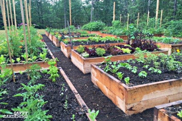 howto plan a veggie garden
