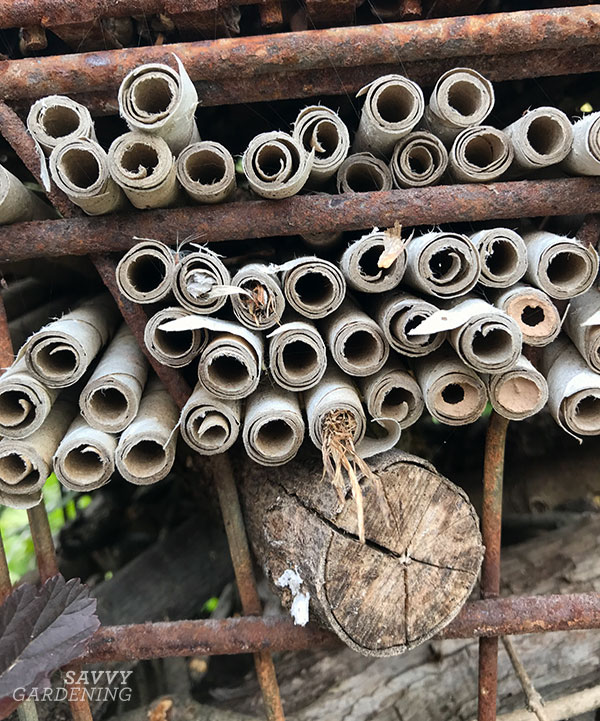 nesting tubes for solitary bees