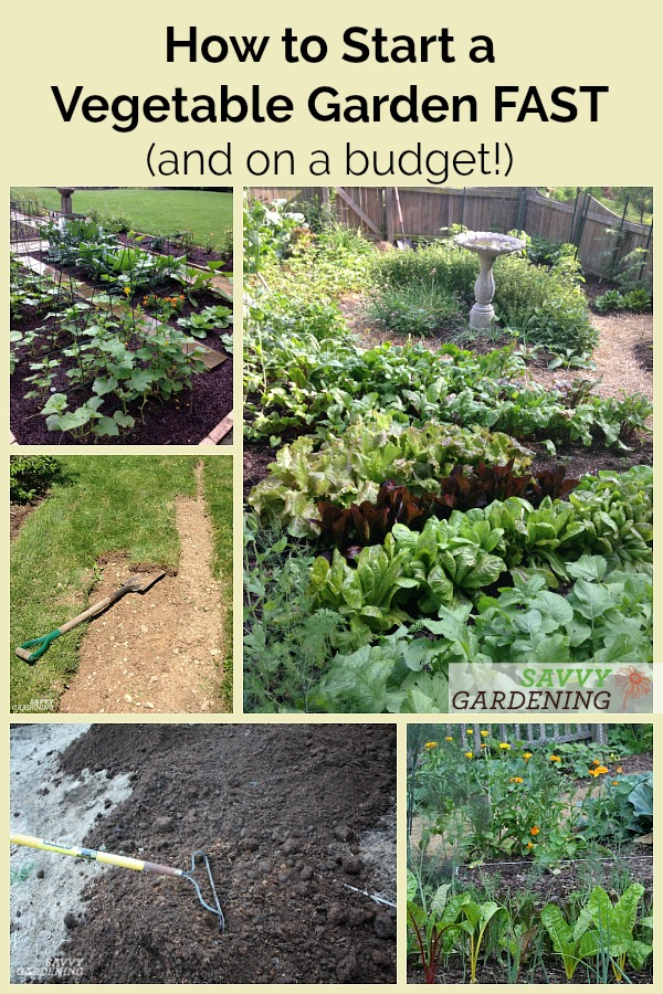 Need to start a vegetable garden FAST? Here's a step by step plan to get growing quickly on a limited budget.