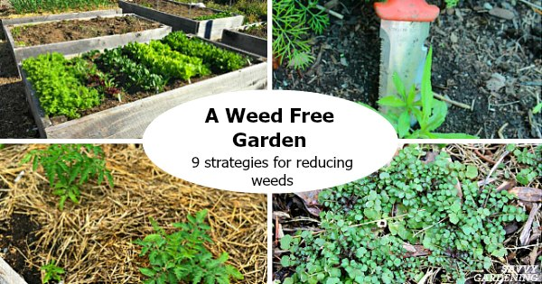 A Weed Free Garden 9 Strategies For, Weed Control For Gardens