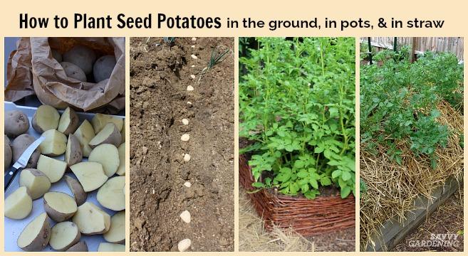 5 10 Gallon Potato Grow Bag Planter Growing Vegetable Seed Planting Pots Garden