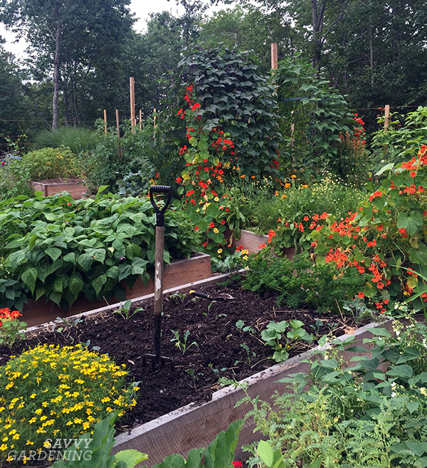 succession planting in a raised bed