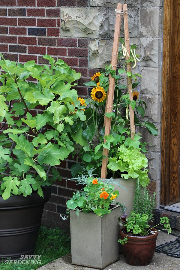 Patio Vegetable Garden Setup And Tips To Get Growing
