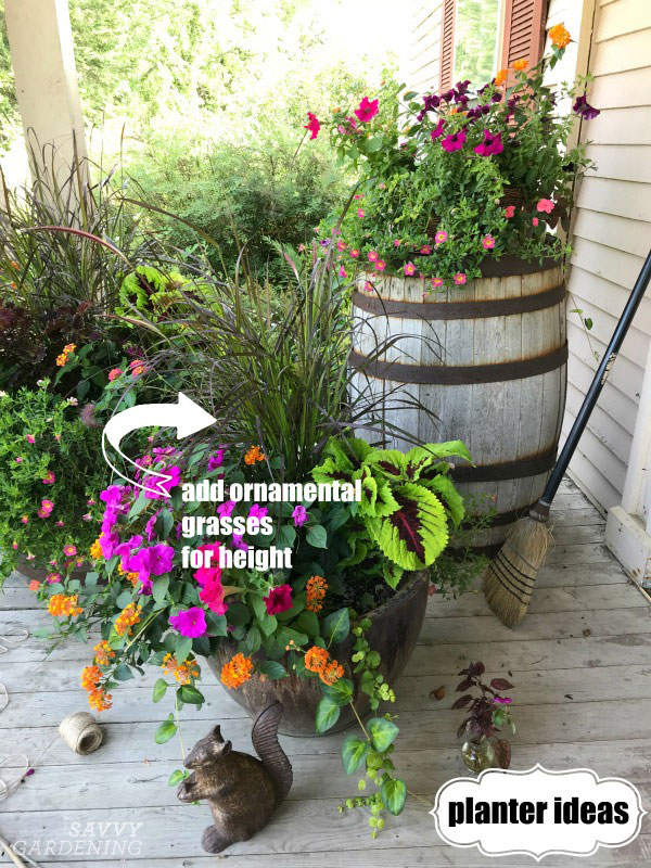 Planting ornamental grasses in containers