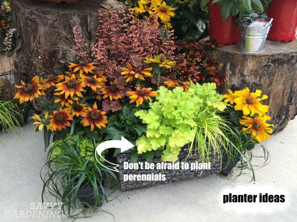 Add perennials to container arrangements