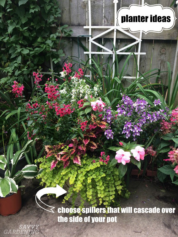 planting spillers in a container