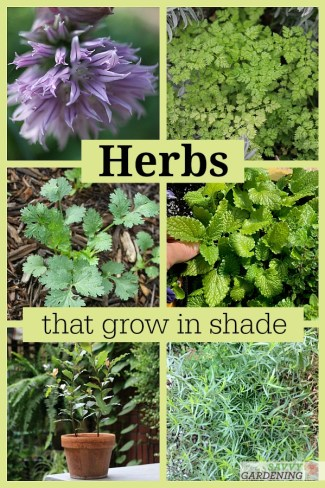 10 Herbs that grow in shade