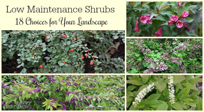 Low Maintenance Shrubs: 18 Choices for Your Garden