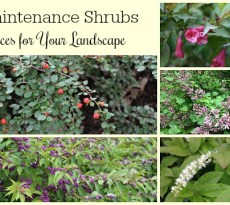The best low maintenance shrubs for your garden