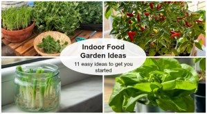 Indoor food garden ideas; 11 easy ideas to get you started