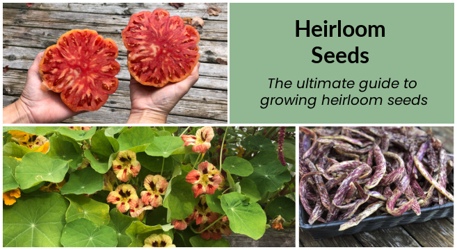 Heirloom seeds add color and diversity to a vegetable garden.