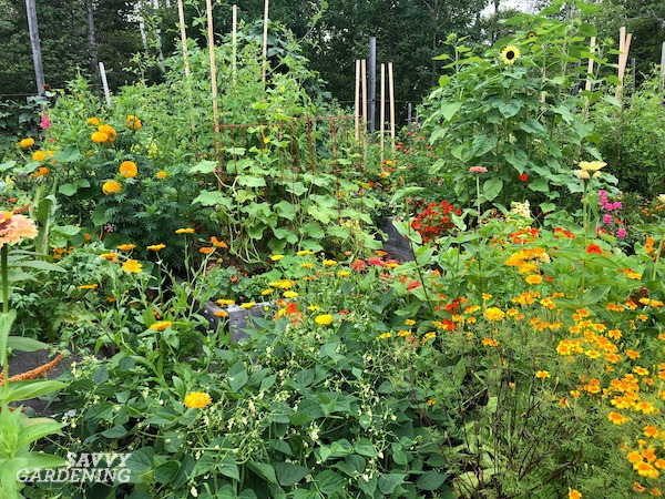 Companion Planting for Tomatoes