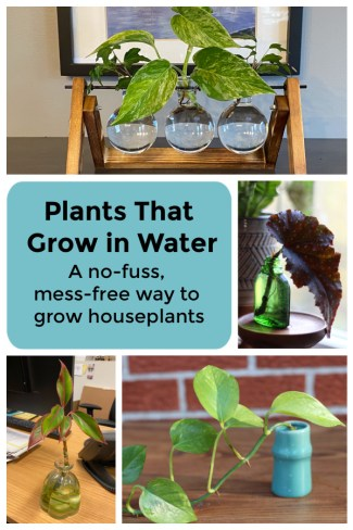 Discover the best plants that grow in water