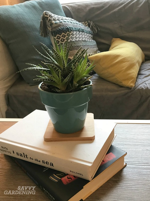 The best succulents for low light areas