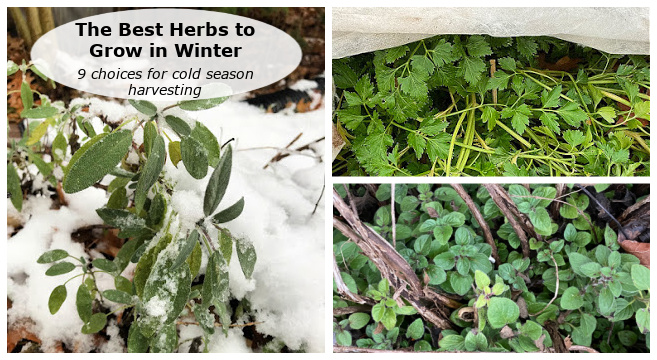 winter herb garden