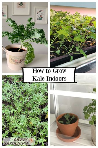 how to grow kale under grow lights and as a houseplant