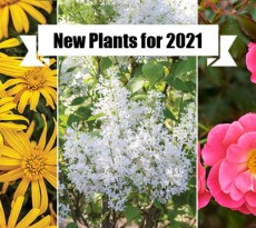 New Plants for 2021 Gardens: Eye-catching Annuals and Perennials