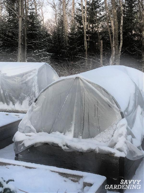 Mini hoop tunnel covering winter herbs