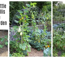DIY vegetable garden trellis