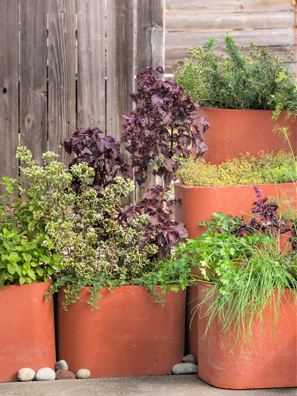 culinary herb containers