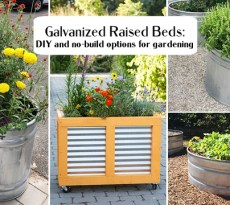 Galvanized raised beds: DIY and no-build options for gardening