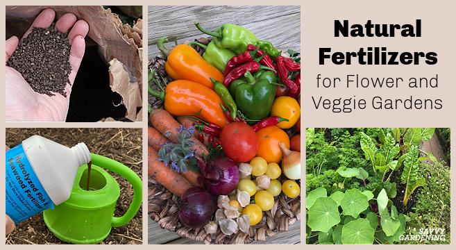 Best organic fertilizers for garden