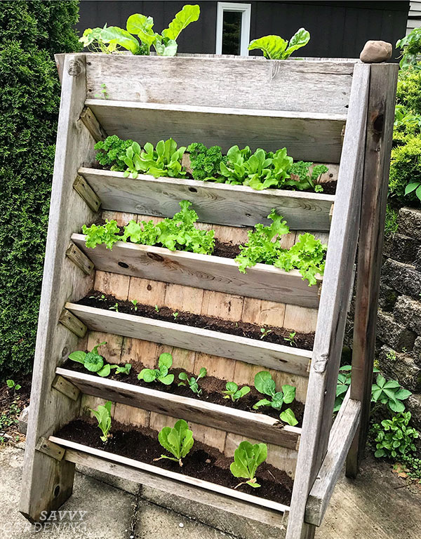 vertical raised bed on a driveway