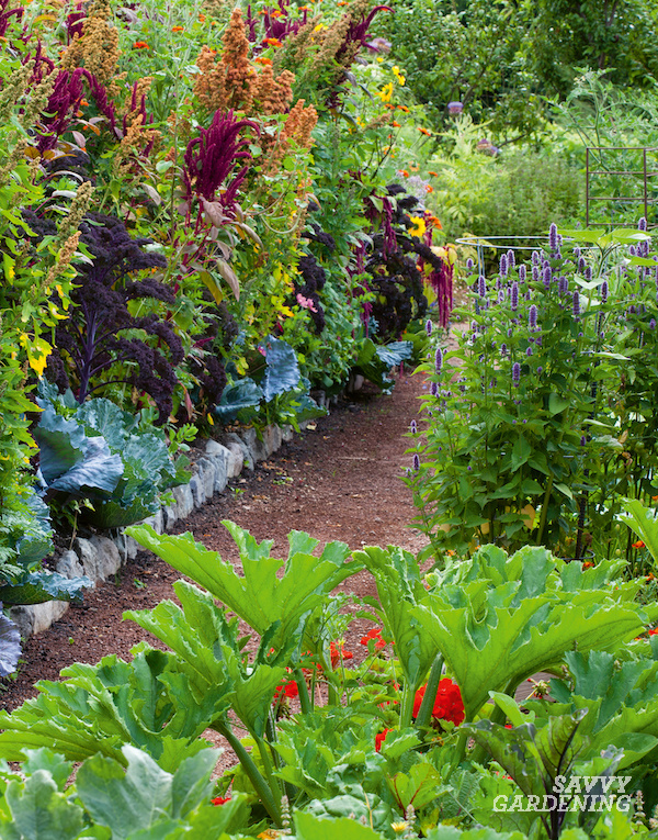 Polyculture garden with different species
