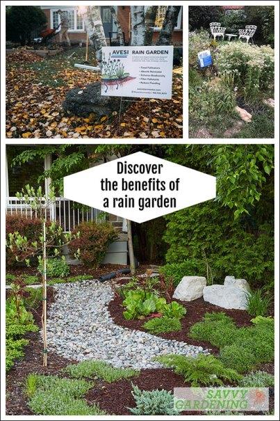 rain garden tips and benefits
