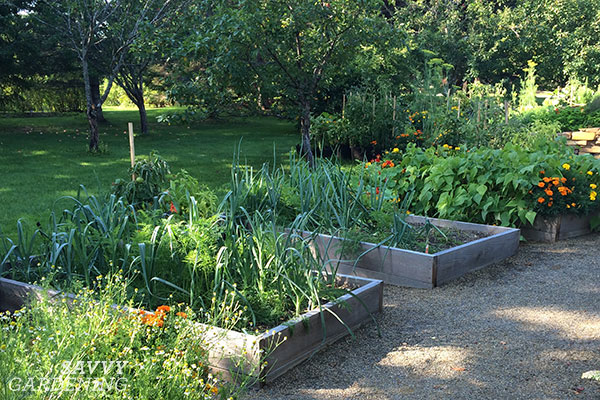 a row of raised beds