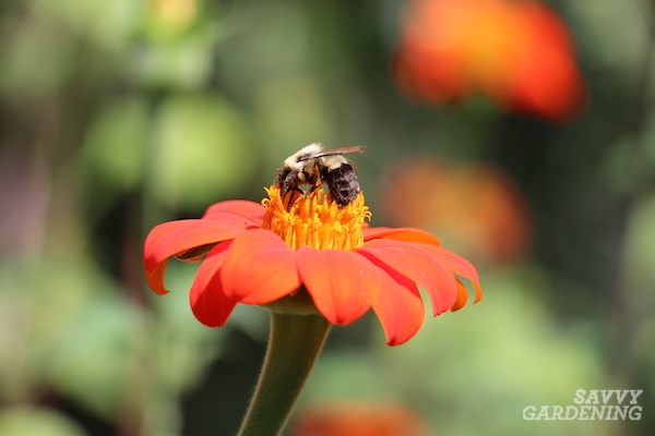 The best flowers for bumble bees