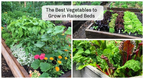 best vegetables to grow in raised beds