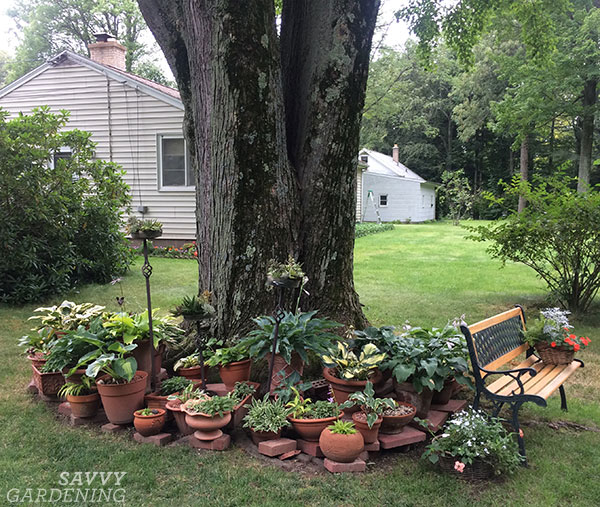 A display of hostas in pots around the base of a tree