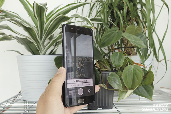 Checking light for houseplants with a light meter