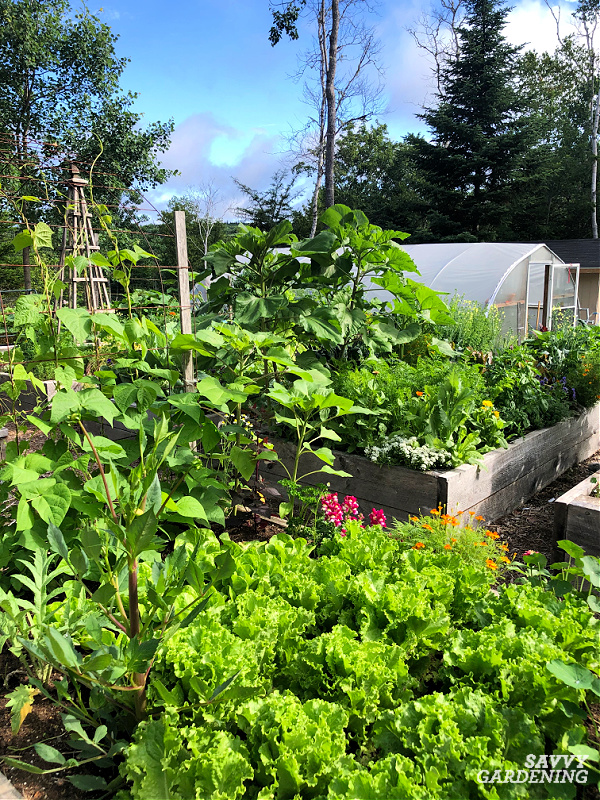 Learn the best vegetables to grow in raised beds