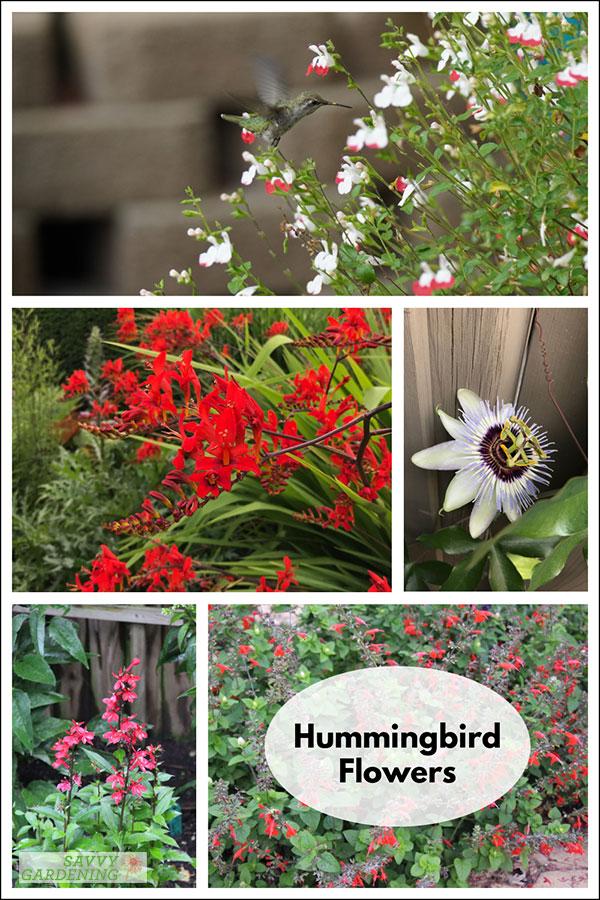 hummingbird flowers to add to your pollinator garden